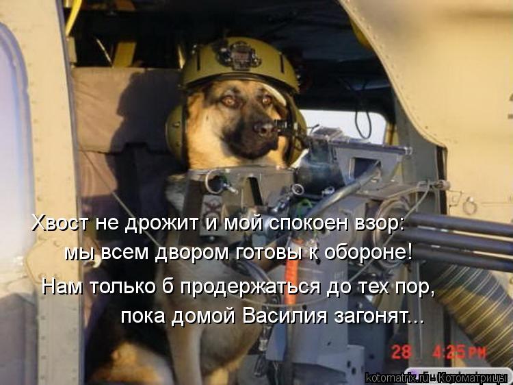 Котоматрица: Нам только б продержаться до тех пор, пока домой Василия загонят... Хвост не дрожит и мой спокоен взор: мы всем двором готовы к обороне!