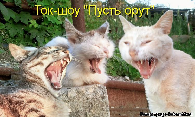 "Котоматрица: Ток-шоу ""Пусть орут"""