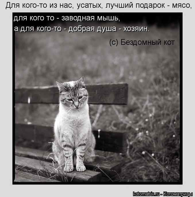 Котоматрица: Для кого-то из нас, усатых, лучший подарок - мясо, для кого то - заводная мышь, а для кого-то - добрая душа - хозяин. (с) Бездомный кот