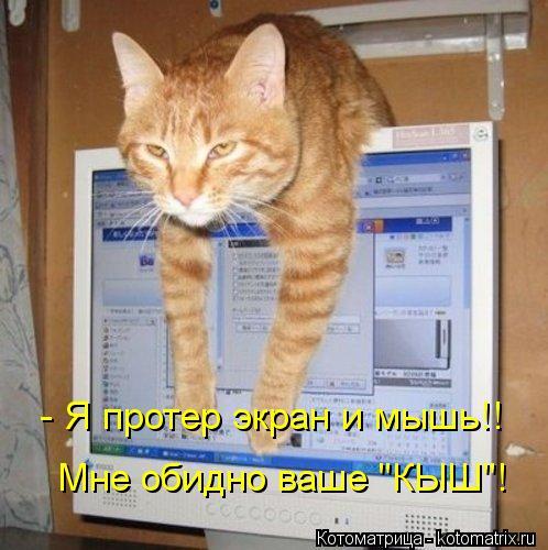 """Котоматрица: - Я протер экран и мышь!! Мне обидно ваше """"КЫШ""""!"""