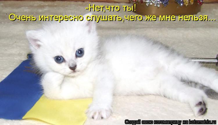 kotomatritsa_z.jpg