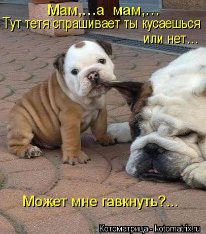 Котоматрица: Мам,…а  мам,…  Тут тетя спрашивает ты кусаешься  или нет…  Может мне гавкнуть?...