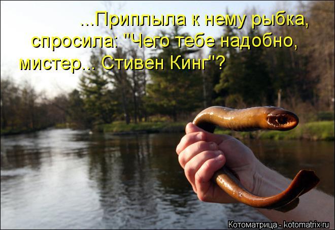 "Котоматрица: ...Приплыла к нему рыбка,  спросила: ""Чего тебе надобно,  мистер... Стивен Кинг""?"