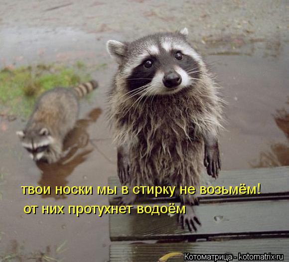 Котоматрица: твои носки мы в стирку не возьмём! от них протухнет водоём