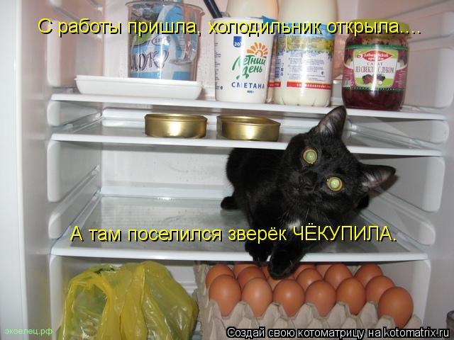 Котоматрица: С работы пришла, холодильник открыла.... А там поселился зверёк ЧЁКУПИЛА.