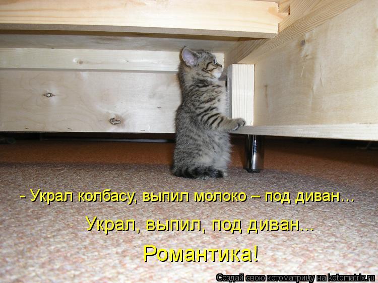 Котоматрица: - Украл колбасу, выпил молоко – под диван… Романтика! Украл, выпил, под диван...