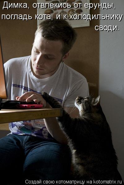 Котоматрица: Димка, отвлекись от ерунды, погладь кота, и к холодильнику своди.