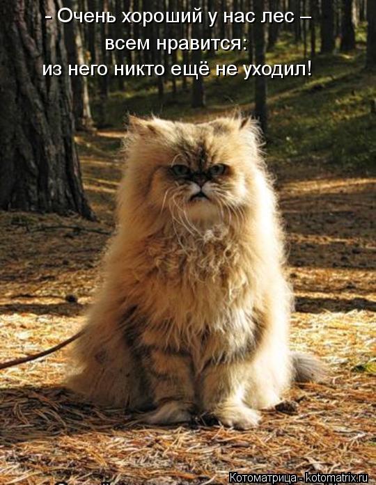 Котоматрица: - Очень хороший у нас лес – всем нравится: из него никто ещё не уходил!