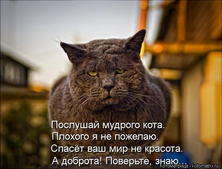 Котоматрица: Послушай мудрого кота.  Плохого я не пожелаю. Спасёт ваш мир не красота. А доброта! Поверьте, знаю...