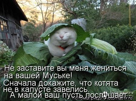 Котоматрица: Не заставите вы меня жениться на вашей Муське! Сначала докажите, что котята не в капусте завелись. А малой ваш пусть послушает...