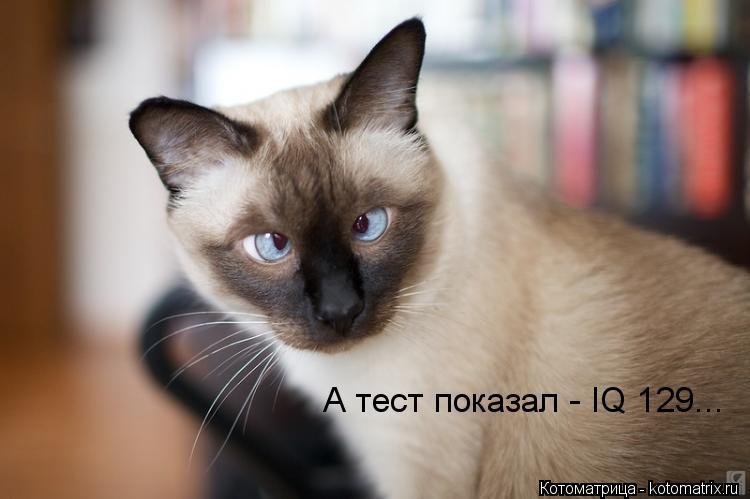 Котоматрица: А тест показал - IQ 129...
