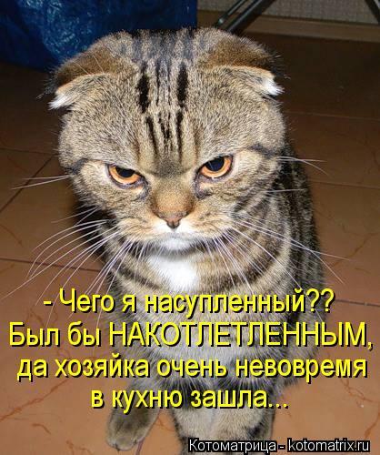 Котоматрица: - Чего я насупленный?? Был бы НАКОТЛЕТЛЕННЫМ, да хозяйка очень невовремя в кухню зашла...