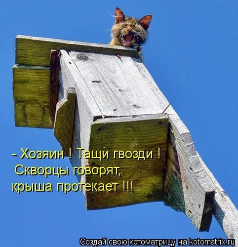 Котоматрица: - Хозяин ! Тащи гвозди ! Скворцы говорят, крыша протекает !!!