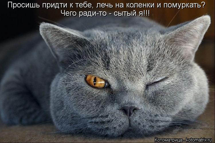 Котоматрица: Просишь придти к тебе, лечь на коленки и помуркать? Чего ради-то - сытый я!!!