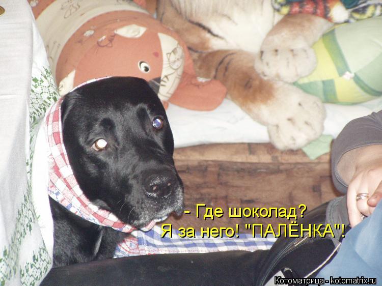 """Котоматрица: - Где шоколад? Я за него! """"ПАЛЁНКА""""!"""