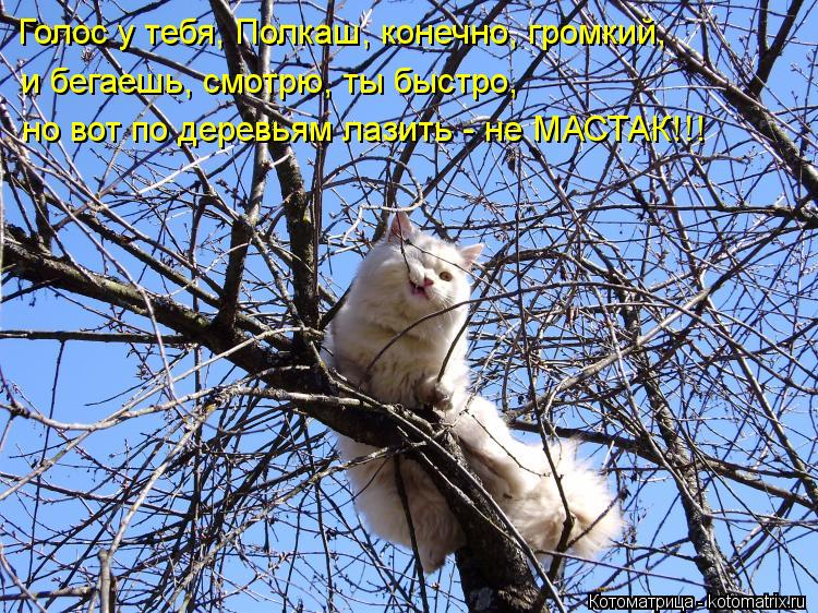 Котоматрица: Голос у тебя, Полкаш, конечно, громкий, и бегаешь, смотрю, ты быстро, но вот по деревьям лазить - не МАСТАК!!!