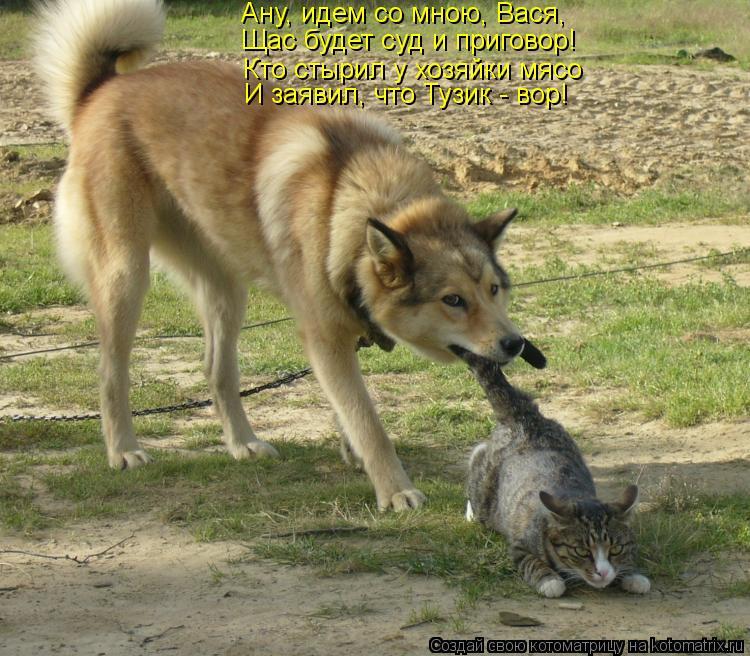 Котоматрица: Ану, идем со мною, Вася, Щас будет суд и приговор! Кто стырил у хозяйки мясо И заявил, что Тузик - вор!
