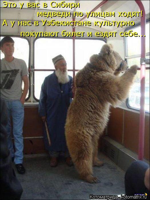 Котоматрица: Это у вас в Сибири  медведи по улицам ходят! А у нас в Узбекистане культурно покупают билет и ездят себе...