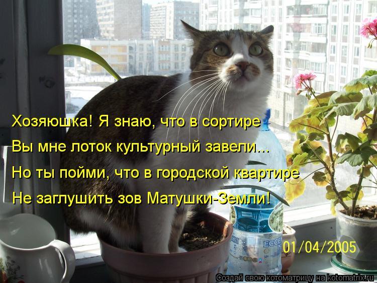 Котоматрица: Хозяюшка! Я знаю, что в сортире Вы мне лоток культурный завели... Но ты пойми, что в городской квартире Не заглушить зов Матушки-Земли!