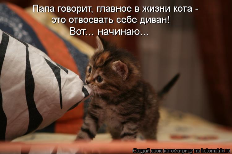 Котоматрица: Папа говорит, главное в жизни кота -  это отвоевать себе диван! Вот... начинаю...