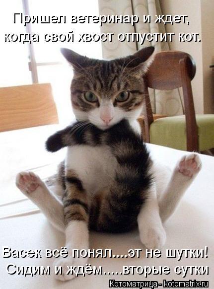 Котоматрица: Пришел ветеринар и ждет, когда свой хвост отпустит кот. Васек всё понял....эт не шутки!  Сидим и ждём.....вторые сутки