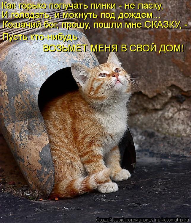 Котоматрица: Пусть кто-нибудь  Как горько получать пинки - не ласку, И голодать, и мокнуть под дождем... Кошачий бог, прошу, пошли мне СКАЗКУ, - ВОЗЬМЕТ МЕНЯ