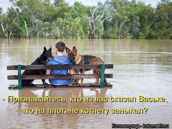 Котоматрица: - Признавайтесь, кто из вас сказал Ваське, что на плотине котлету заныкал?