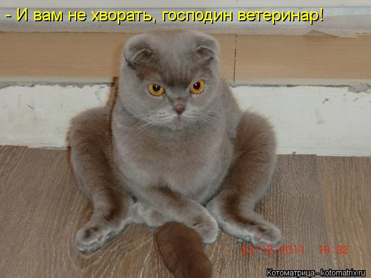 Котоматрица: - И вам не хворать, господин ветеринар!