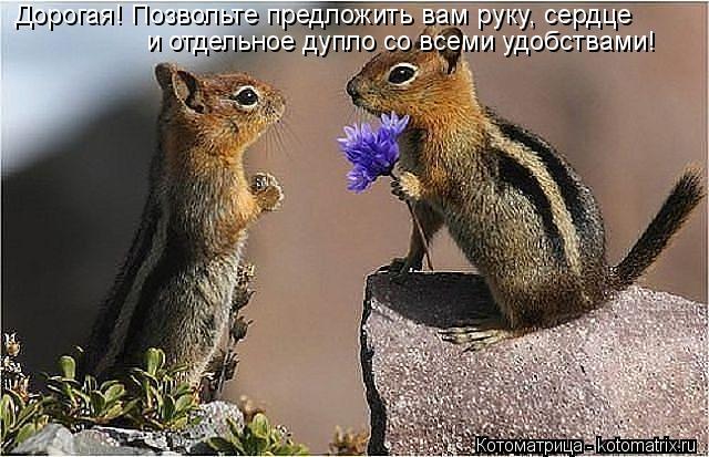 Котоматрица: Дорогая! Позвольте предложить вам руку, сердце и отдельное дупло со всеми удобствами!
