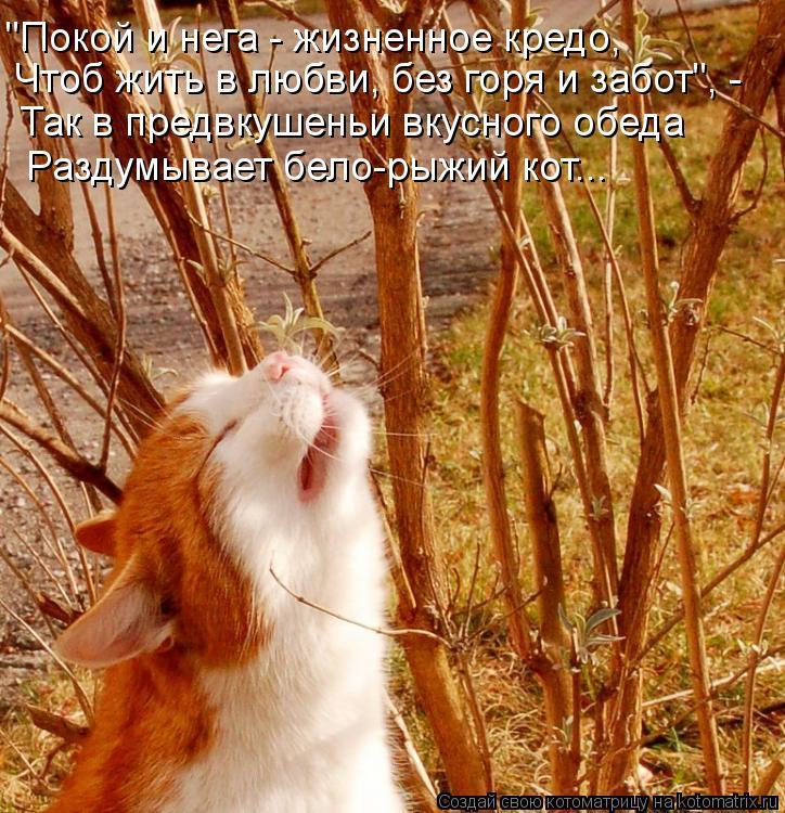 """Котоматрица: Чтоб жить в любви, без горя и забот"""", - """"Покой и нега - жизненное кредо, Так в предвкушеньи вкусного обеда Раздумывает бело-рыжий кот..."""