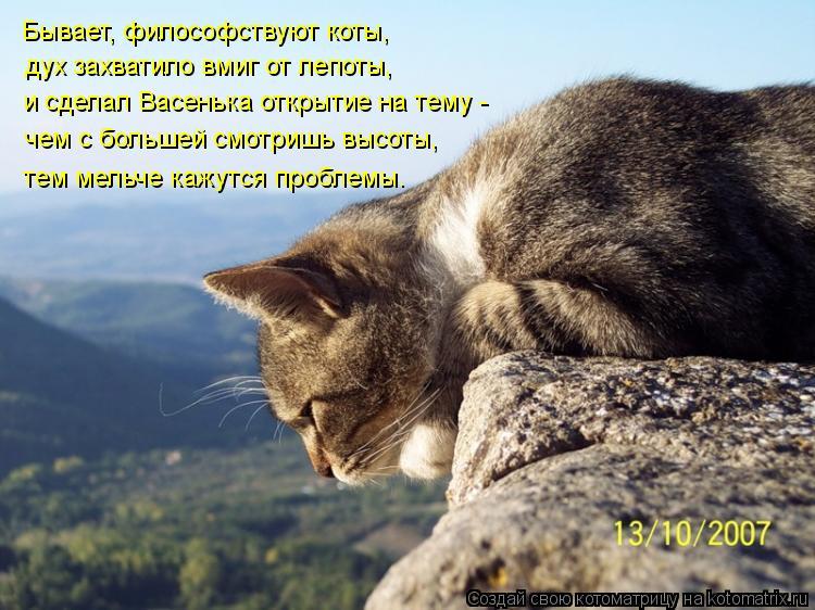 Котоматрица: Бывает, философствуют коты, дух захватило вмиг от лепоты,  тем мельче кажутся проблемы. чем с большей смотришь высоты, и сделал Васенька отк