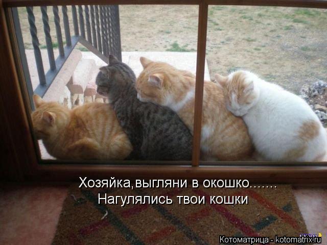 Котоматрица: Хозяйка,выгляни в окошко....... Нагулялись твои кошки