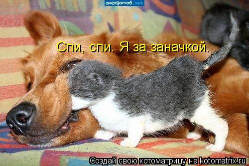 Котоматрица: Спи, спи. Я за заначкой.