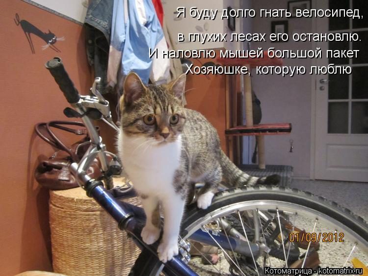 Котоматрица: в глухих лесах его остановлю. Я буду долго гнать велосипед, И наловлю мышей большой пакет Хозяюшке, которую люблю