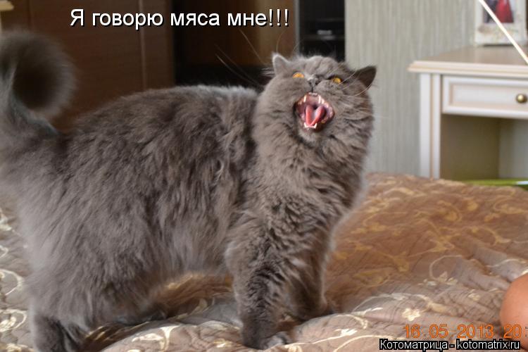Котоматрица: Я говорю мяса мне!!!
