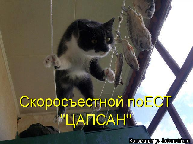 "Котоматрица: Скоросъестной поЕСТ ""ЦАПСАН"""