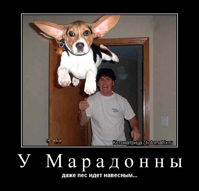 Котоматрица: У Марадонны даже пес идет навесным...