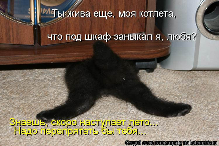 Котоматрица: Ты жива еще, моя котлета,  что под шкаф заныкал я, любя? Знаешь, скоро наступает лето... Надо перепрятать бы тебя...