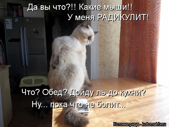 Котоматрица: Да вы что?!! Какие мыши!! У меня РАДИКУЛИТ! Что? Обед? Дойду ль до кухни? Ну... пока что не болит...