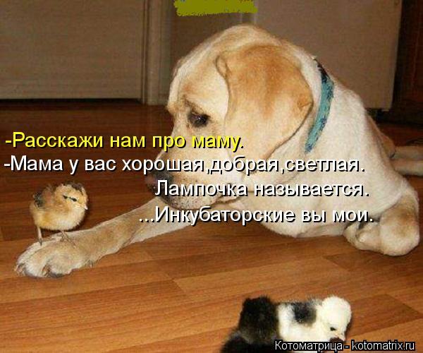 Котоматрица: -Расскажи нам про маму. -Мама у вас хорошая,добрая,светлая. Лампочка называется. ...Инкубаторские вы мои.