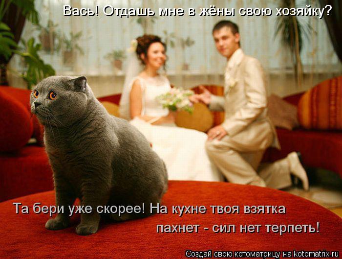 Котоматрица: Вась! Отдашь мне в жёны свою хозяйку? Та бери уже скорее! На кухне твоя взятка пахнет - сил нет терпеть!