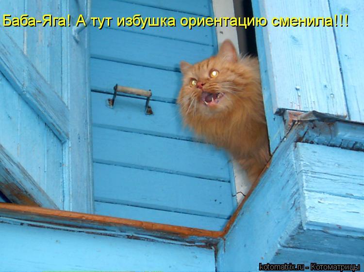 Котоматриця!)))) - Страница 11 Kotomatritsa_Zq
