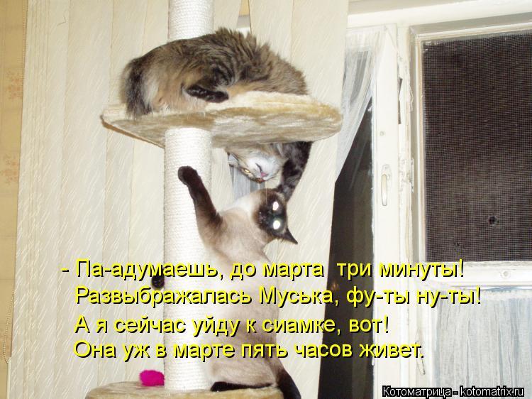 Котоматрица: - Па-адумаешь, до марта  три минуты! Развыбражалась Муська, фу-ты ну-ты!  Она уж в марте пять часов живет. А я сейчас уйду к сиамке, вот!