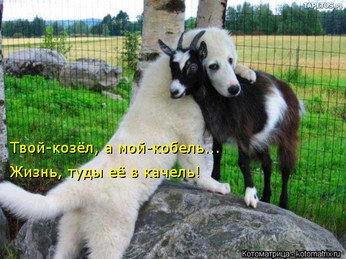 Котоматрица: Твой-козёл, а мой-кобель... Жизнь, туды её в качель!
