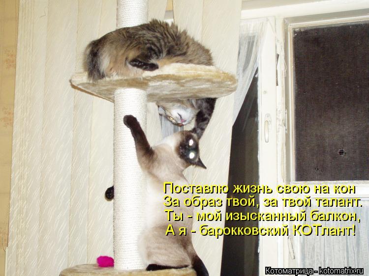 Котоматрица: Поставлю жизнь свою на кон За образ твой, за твой талант. Ты - мой изысканный балкон, А я - барокковский КОТлант!