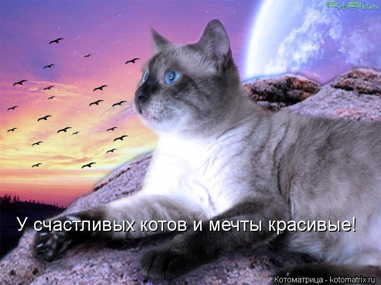 Котоматрица: У счастливых котов и мечты красивые!