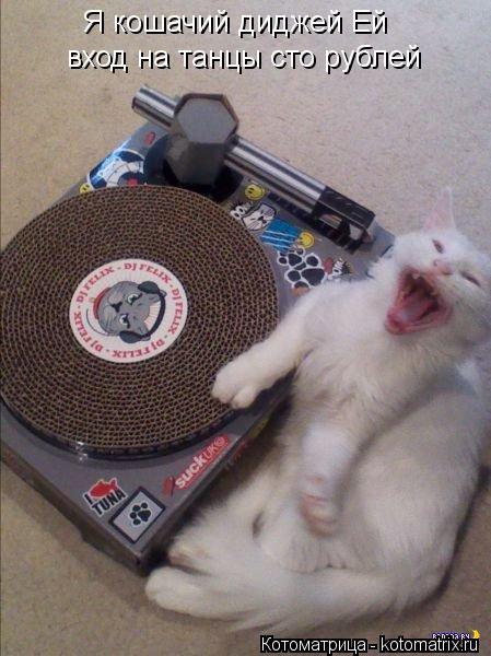 Котоматрица: Я кошачий диджей Ей вход на танцы сто рублей