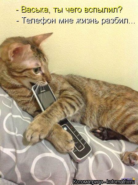 Котоматрица: - Васька, ты чего вспылил? - Телефон мне жизнь разбил...