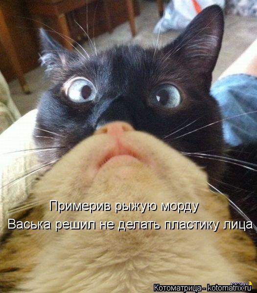 Котоматрица: Примерив рыжую морду Васька решил не делать пластику лица