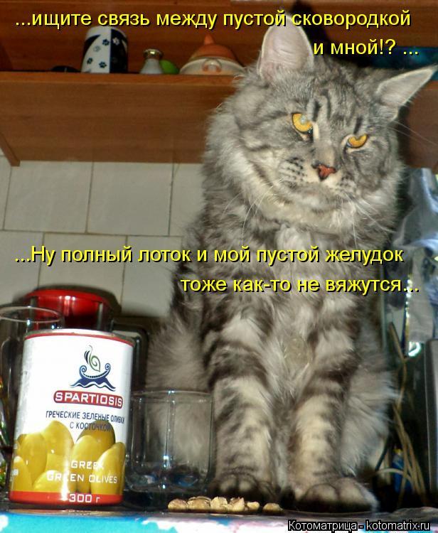 Котоматрица: ...ищите связь между пустой сковородкой  и мной!? ... ...Ну полный лоток и мой пустой желудок тоже как-то не вяжутся...